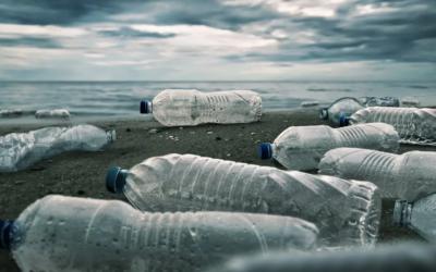Plastikmüll zerstört Natur